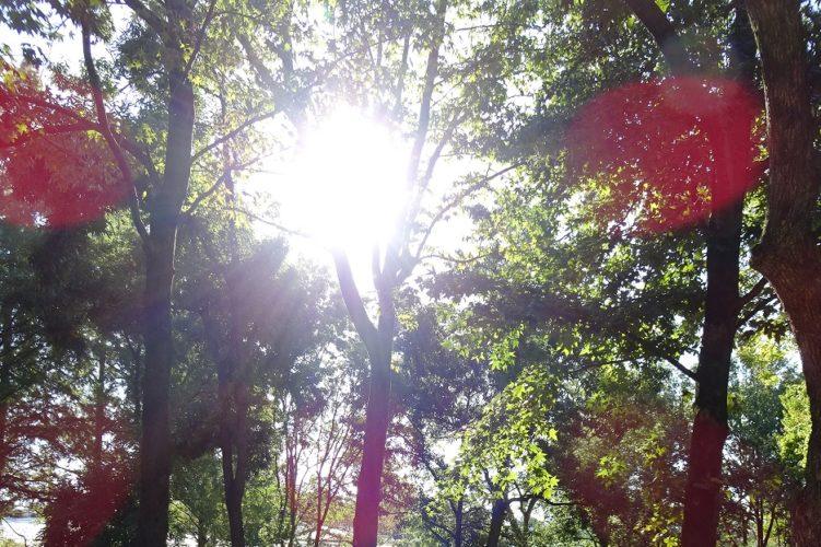 森林・林業