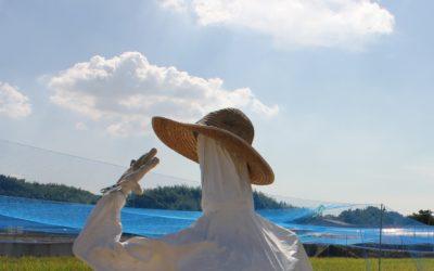 農業関係者向け暑さ対策セミナーの参加者を募集中です。