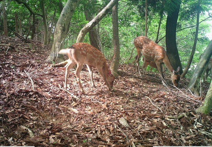 自然生態系